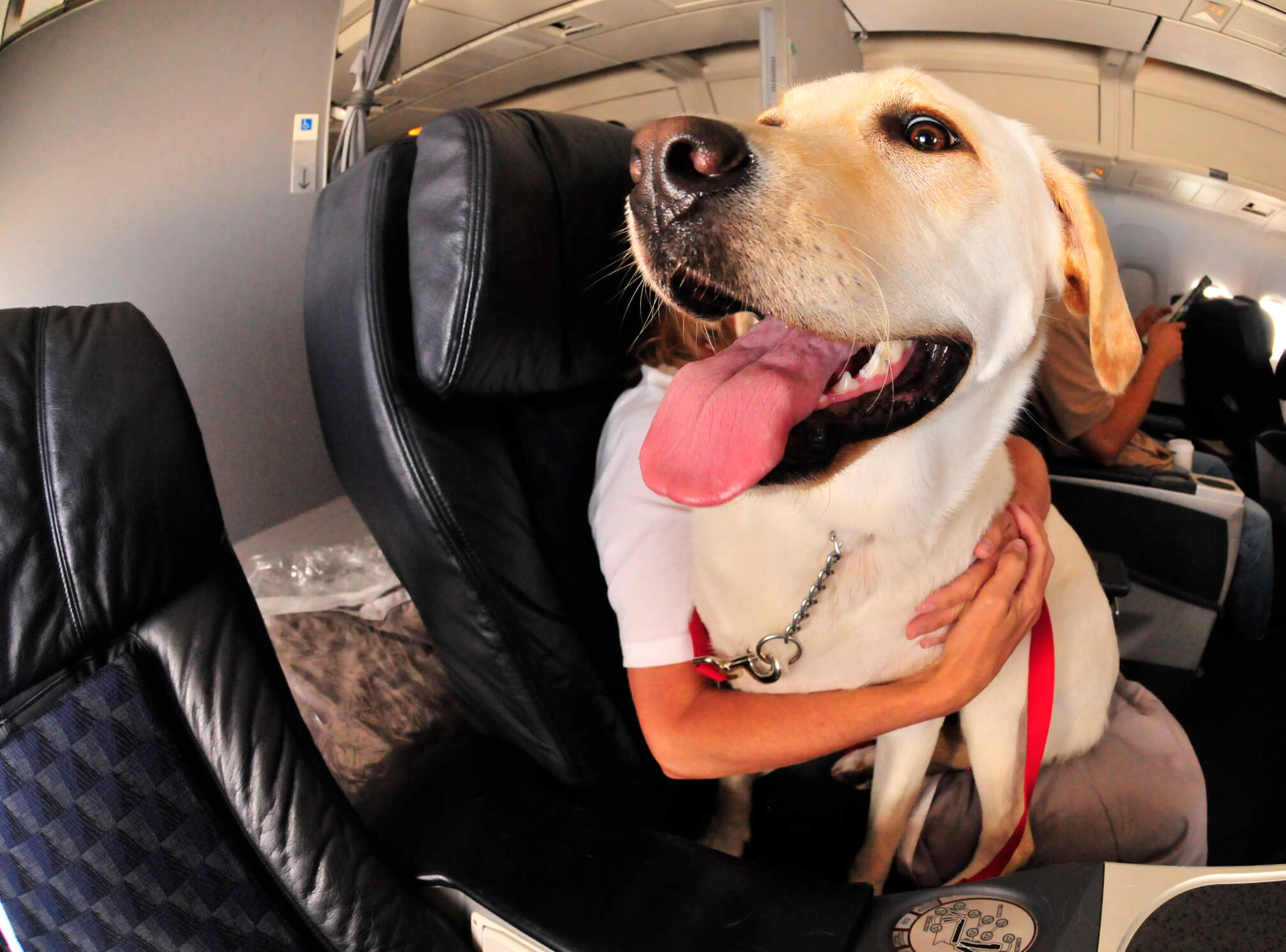 Pets on Planes! Aussies may soon be able to take their fury friends onboard